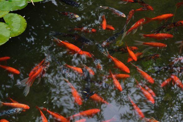 Molti nuotavano. Alcuni sembrava che volassero