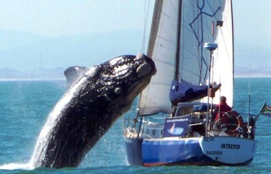 balena su barca